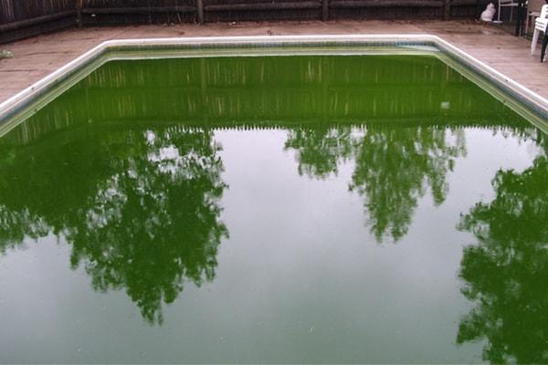 Algae Treatment Houston TX